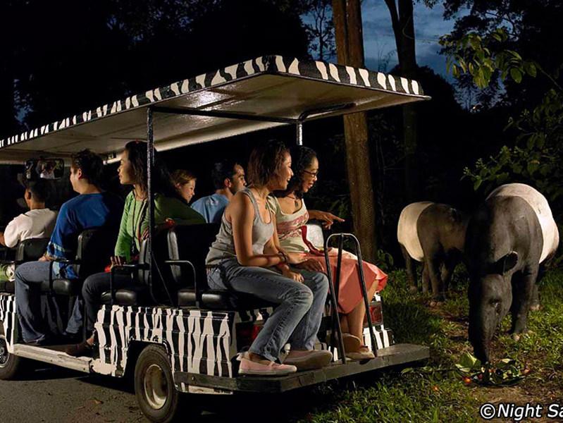 night-safari