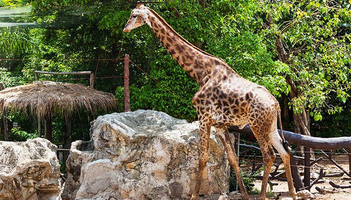 top-10-vui-choi-tai-bangkok-cung-gia-dinh-dusit-zoo