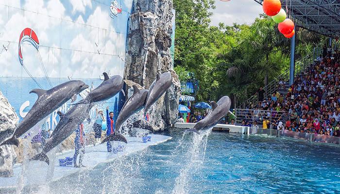 top-10-vui-choi-tai-bangkok-cung-gia-dinh-safari-world