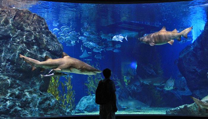 top-10-vui-choi-tai-bangkok-cung-gia-dinh-sealife