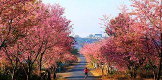 Con đường Đà Lạt