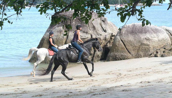 cưỡi ngựa langkawi