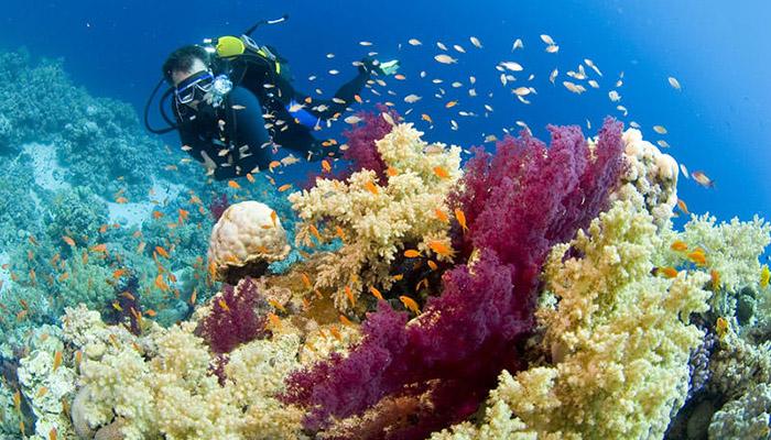 đáy biển ao nang