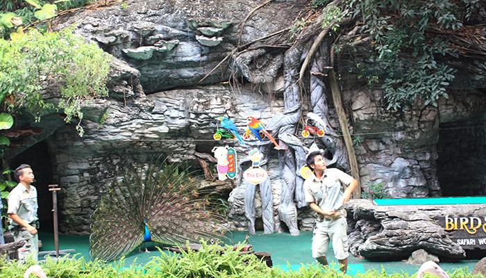Kinh nghiệm đi Safari World Bangkok - bird show