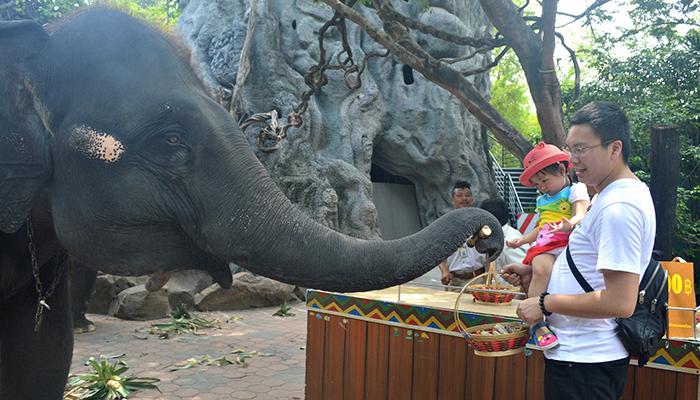 Cho voi ăn, mỗi giỏ thức ăn là 100 baht
