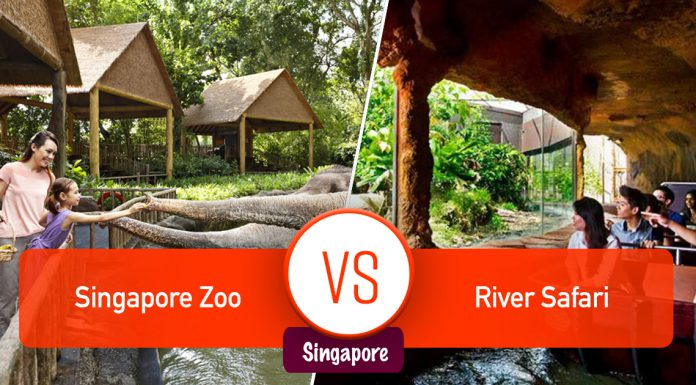 Singapore Zoo và River Safari Singapore