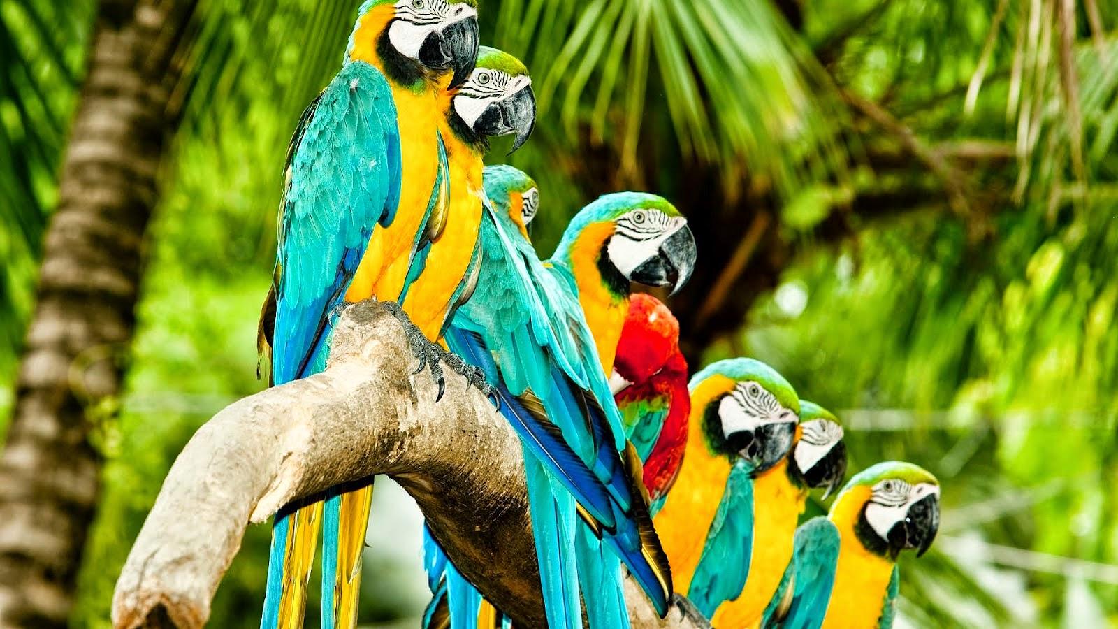 Những chú vẹt thân thiện chờ đợi du khách đến vui chơi cùng