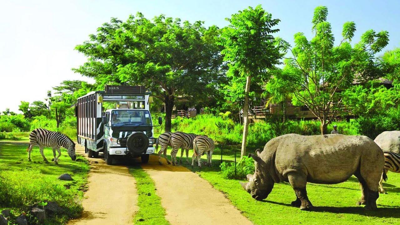 Ghé thăm những loài động vật hoang dã trong môi trường tự nhiên