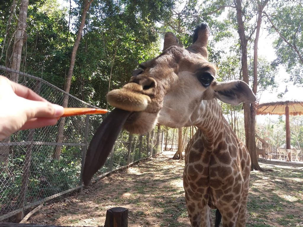 Du khách có thể mua vé cho hươu hoặc voi ăn với giá 30.000vnd/phần ăn