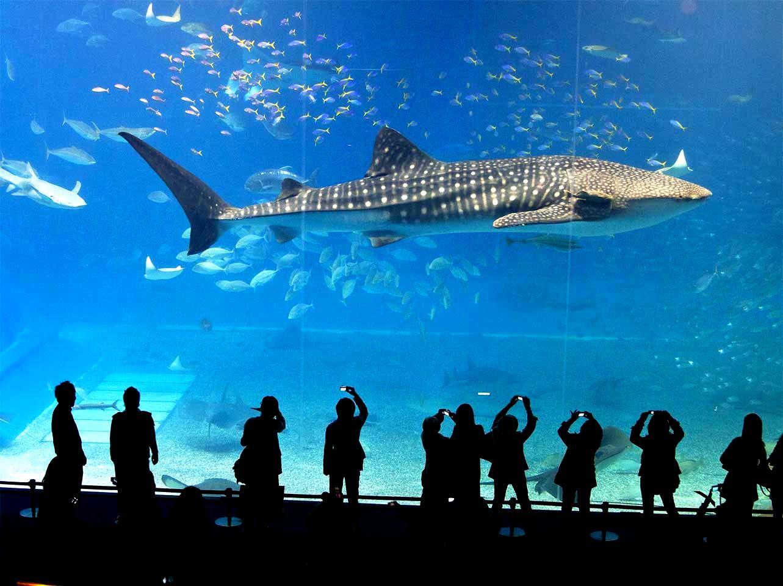 Show diễn 5D dưới thủy cung luôn được nhiều du khách chờ đợi