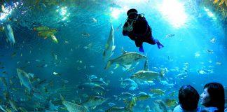 chiang_mai_zoo_aquarium