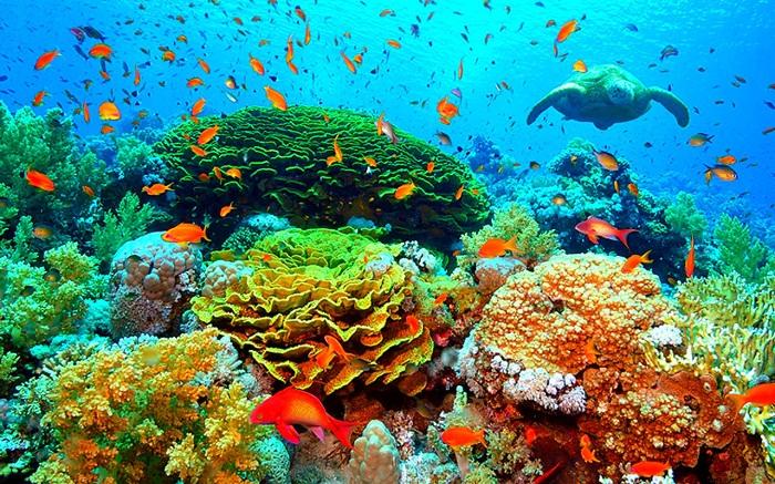 Hệ sinh thái biển vô cùng phong phú và đa dạng