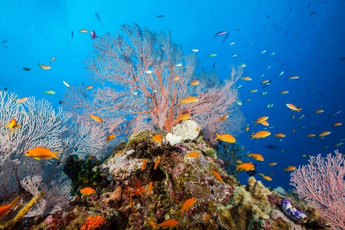 Khung cảnh tuyệt đẹp dưới đáy biển Hòn Tằm