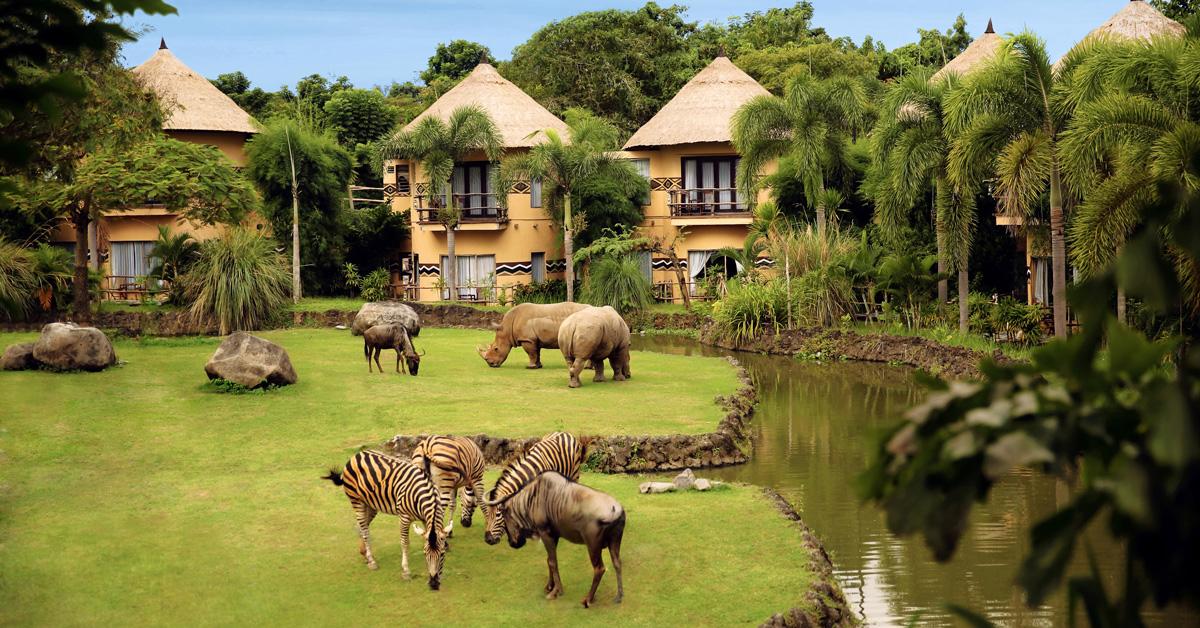 Hòa mình vào thiên nhiên và khám phá cuộc sống hoang dã ở Bali Safari and Marine Park