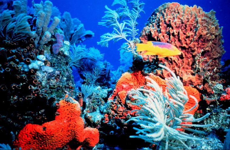 Lặn biển ngắm san hô luôn là hoạt động hấp dẫn nhất