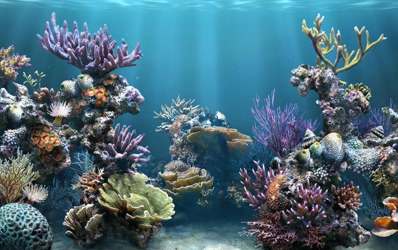 Quả xứng danh kho báu quý nhất đại dương Phú Quốc
