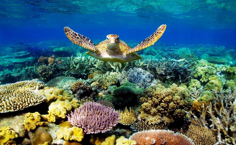 Dù biết bơi hay không bạn cũng có thể tham gia tour lặn biển ngắm san hô