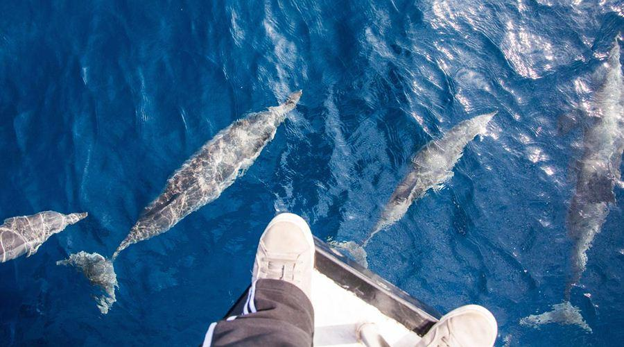 Theo sự hướng dẫn của những ngư dân đầy kinh nghiệm bạn có thể ngắm những màn trình diễn ca voi tuyệt vời