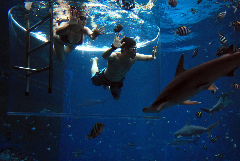 Bơi lượn cùng những chú cá, tại sao không?