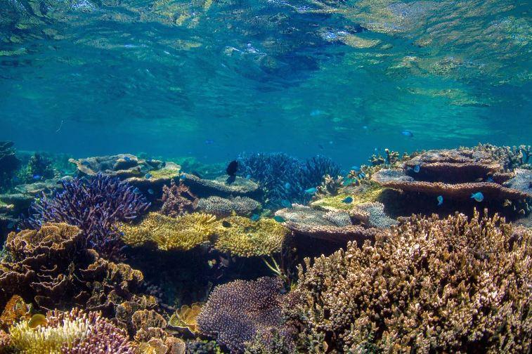 Những khu rừng san hô siêu xinh đẹp dưới đáy biển Nha Trang