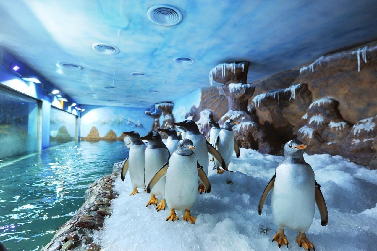Nơi sinh sống của những chú chim cánh cụt đáng yêu