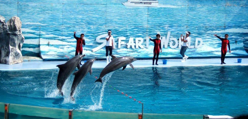 Màn biểu diễn cá heo luôn gây ấn tượng cho du khách!