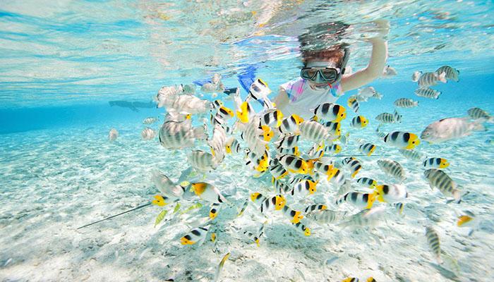 Trải nghiệm lặn biển tại đây bạn sẽ thấy được vô số loài cá vì nước biển ở đây rất trong.