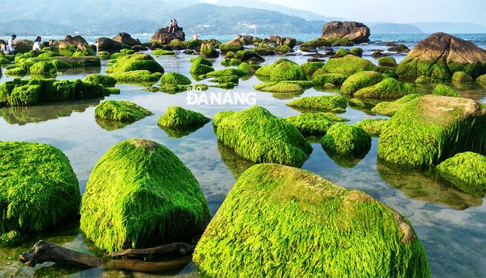 Điểm đặc biệt là bãi đá khổng lồ rất riêng của Rạn Nam Ô. (Nguồn: baodanang)