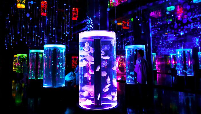 """Những chú sứa """"mini"""" đa sắc màu lướt nhẹ nhàng trong những bể kính tạo nên một cảm giác vô cùng thư giãn cho người nhìn."""