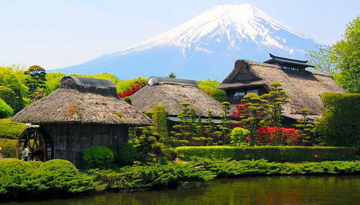 Dàn cây bonsai được chăm sóc