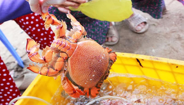 Cua huỳnh đế cũng là một món hải sản nổi tiếng của vùng Lý Sơn. Nguồn: lysontravel.org