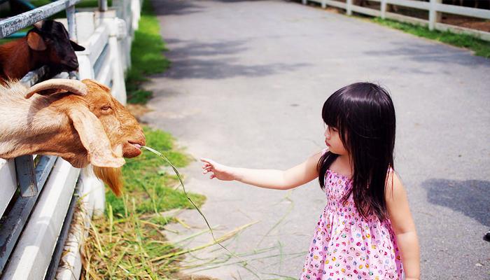Bạn và con bạn thậm chí có thể cho dê hoặc lừa ăn.