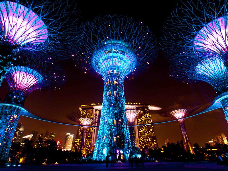 Những siêu cây khổng lồ được chiếu sáng rực rỡ vào ban đêm