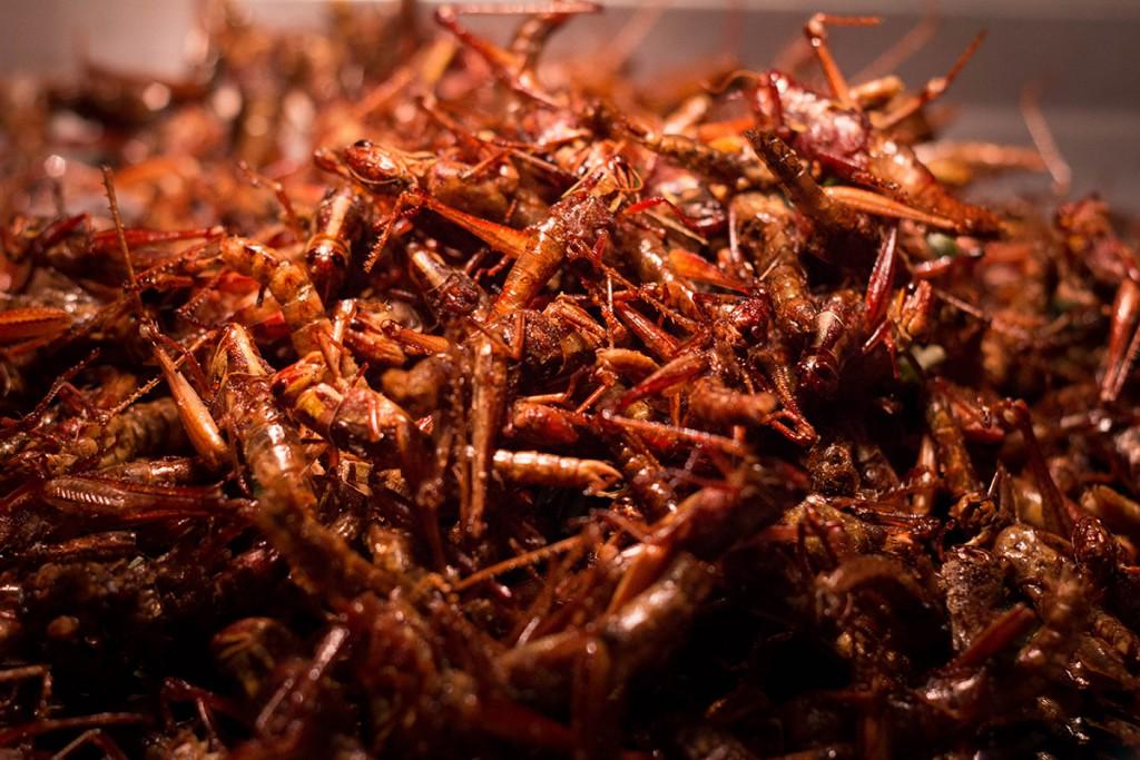 Snack côn trùng Bangkok - Châu chấu rang muối ớt