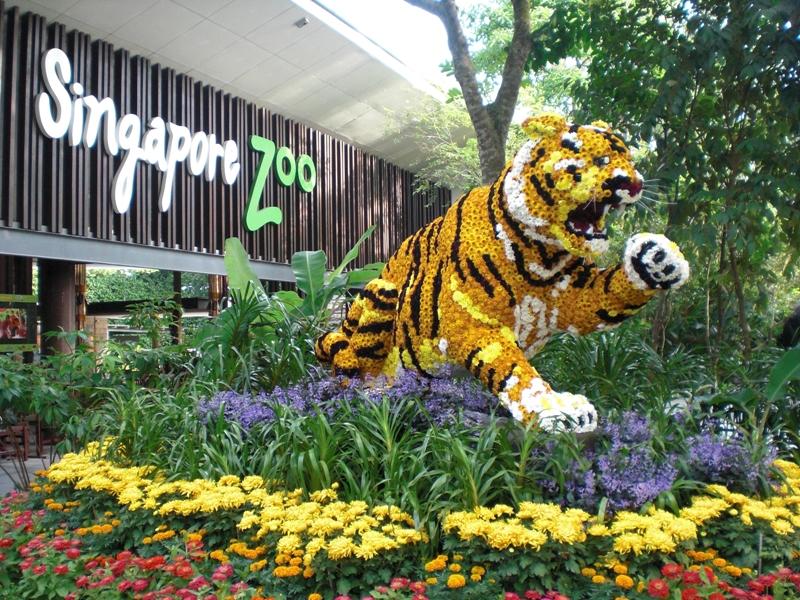 Vườn thú Singapore là một trong những vườn thú đẹp hoang sơ và đa dạng nhất khu vực.