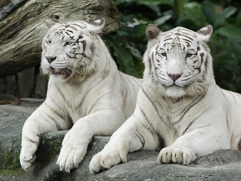 Bạn phải tuyệt đối đứng trong vạch an toàn và không được chạm vào thú, cũng đừng tự ý cho thú ăn nhé!