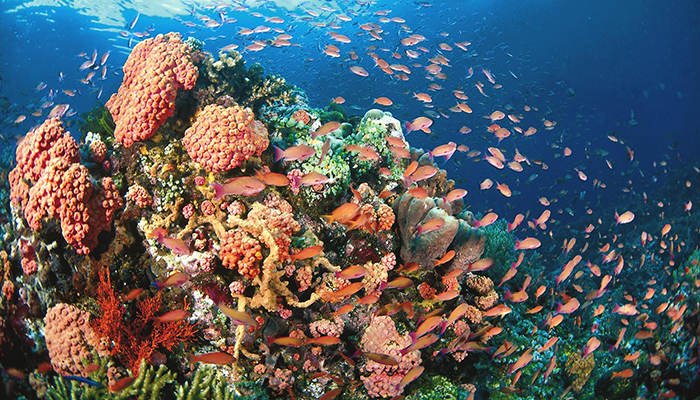 rạn san hô ở sihanoukville