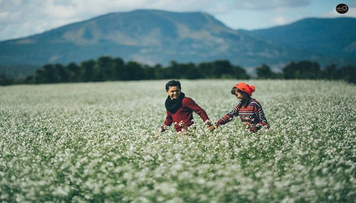 Cánh đồng hoa cải trắng Tu Tra