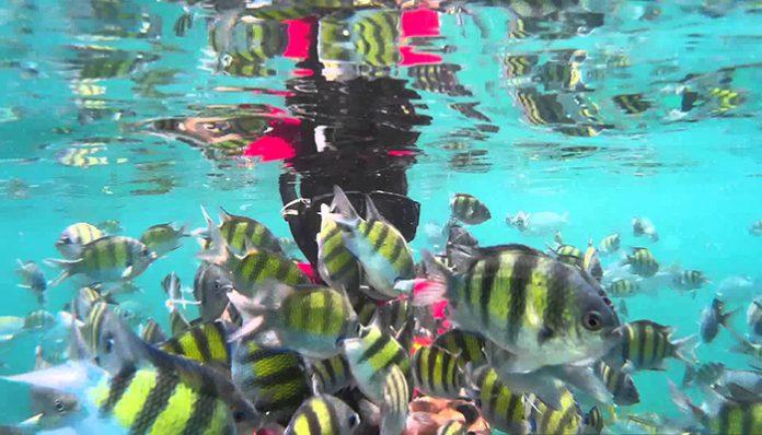 lặn biển ngắm cá langkawi