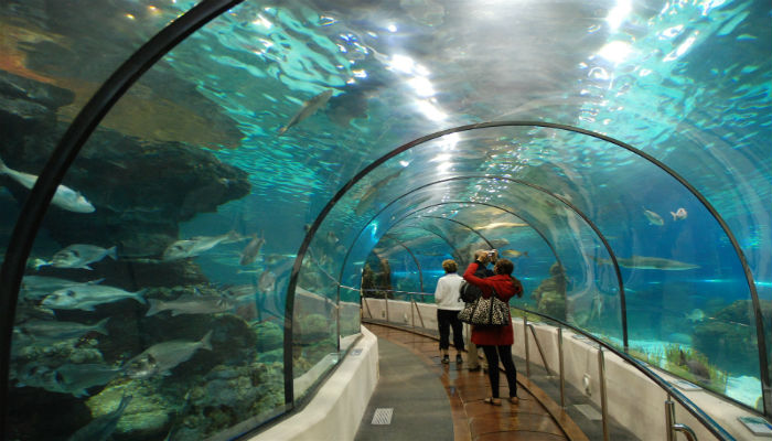 Vinpearl Aquarium Times City