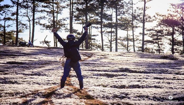 Cánh đồng cỏ tuyết Đà Lạt