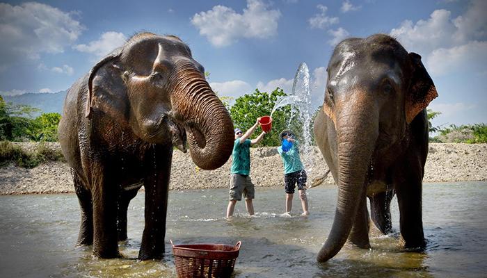 Tắm cho voi tại Elephant Nature Park