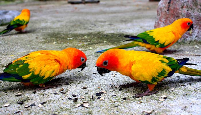 safari world - cho chim ăn
