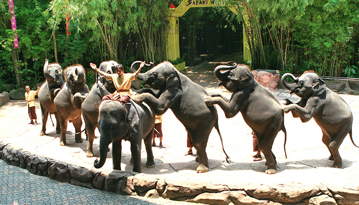 elephant show - safari world