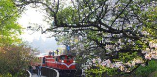 Kinh nghiệm đi cao nguyên Alishan và các địa điểm đẹp nhất ở Alishan