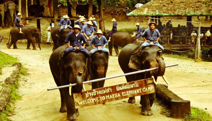 du lịch chiang mai mùa loy krathong