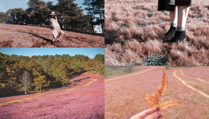 lịch trình lễ hội cỏ hồng