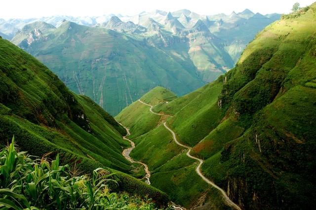 Du lịch Hà Giang mùa hoa tam giác mạch
