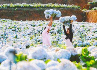 5 vườn hoa đẹp nhất Đà Lạt