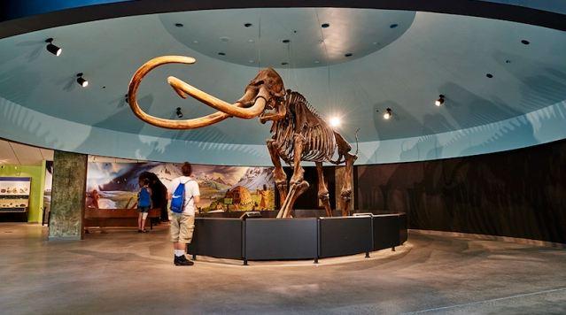 Top 7 bảo tàng đặc sắc nhất Singapore 4